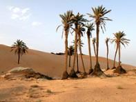 oase woestijn